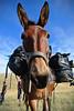 Barbara !!! (Gaia83) Tags: veterinarifotografi trekkingconimuli