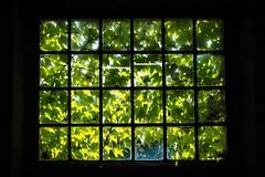 Am Fenster / At the window (Lens Daemmi) Tags: window germany deutschland fenster olympus brandenburg omd em10 zehdenick ziegeleiparkmildenberg