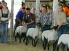 """Sheep 2014 • <a style=""""font-size:0.8em;"""" href=""""http://www.flickr.com/photos/78989085@N02/14876877234/"""" target=""""_blank"""">View on Flickr</a>"""