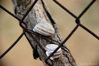 Lumache imprigionate
