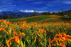 (nodie26) Tags: flower canon landscape taiwan    hualien     yellower      1755mm