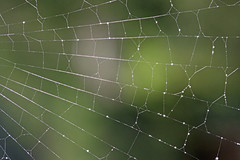 Spider Web (1selecta) Tags: light green wet water thread beautiful lines rain dark vanishingpoint amazing fantastic waterdrop bokeh web spiderweb silk line cobweb raindrops delicate waterdrops cob spidersweb vanishing fragile raindrop vanishinglines spidersilk radials coppe orbweb vanishingline spidersthread coppeweb