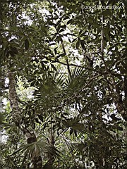 3234742073_497b1b380c_o (gray.florie) Tags: allrightsreserved usewithoutpermissionisillegal ©2009florencetomasulogray florencegray floriegrayflorencetomasulograytomasulofloriegrayfloriegraycom