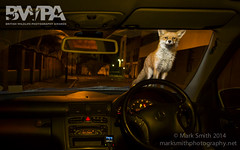 BWPA 2014 - Urban Wildlife - Highly Commended (markgsmith) Tags: city uk light urban london canon photography mark wildlife low competition smith fox british awards highly 2014 vulpes commended bwpa