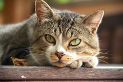 Let's take a rest! (anto.bnmo) Tags: cute cat eyes rest