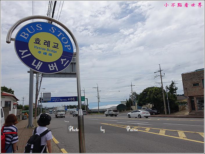 濟州島牛沼河口 (28).JPG