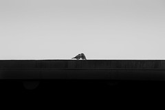 You & Me (picazam) Tags: street white black love me birds canon you iii minimal 5d mk bir shuchi azam picazam