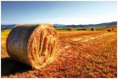 Bella Toscana (kurtwolf303) Tags: italy topf25 field canon landscape eos topf50 scenery italia 500v20f harvest straw tuscany hay bales toscana landschaft haybale 1000views ernte grainfield strohballen balesofstraw 600d 750views 1000v40f unlimitedphotos canoneos600d canont3i minimum1000v minimum700v
