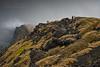 Sull'orlo della valle (Andrea Rapisarda) Tags: italy nature fog lava italia ngc natura valley edge sicily nebbia etna sicilia d800 ©allrightsreserved valledelbove nationalgeographicgroup nikon28300mm mtetnavolcano