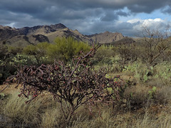 Sabino Canyon (nebulous 1) Tags: az cactus sabinocanyon saguarocactus tucson clouds eveing landscape light mountains nikon nebulous1 glene staghorncholla catalinamountains arizona