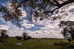 Assam_006 (SaurabhChatterjee) Tags: assam countryside guwahati httpsiaphotographyin india lakhimpur rural saurabhchatterjee siaphotography tea teagardens tezpur village