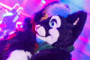 _MG_0697 (Tiger_Icecold) Tags: confuzzled cfz2016 cf2016 furcon furry convention fursuit birmingham party deaddog ddp deaddogparty