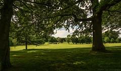 Park Panorama (aaron_eos_photography) Tags: park trees summer panorama sun tree nature oak sony sunny lurganpark lightroom5 sonyslta77v sonydt1650mmf28ssm