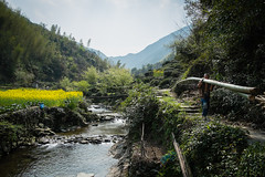 Wuyuen (j.wilkiewicz) Tags: china man field work river stream village tea path farm chinese bamboo farmer carry rapeflower wuyuen jangxi