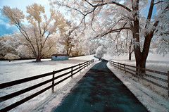 Asphalt Road (shutterclick3x) Tags: rural countryside infrared backroads 720nm fauxcolor frankloose