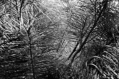 Into the Woods (talpazfridman) Tags: trip trees blackandwhite bw white abstract black tree nature monochrome strange up leaves horizontal mystery forest walking landscape botanical lost outdoors grey israel blackwhite leaf high scary woods day branch view mesh outdoor hiking walk branches gray monotone monochromatic hike growth mysterious vegetation environment middle botany scare leafs overhead thick clutter forward upward into talpazfridman