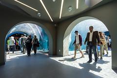 Journey to Churchill - Assiniboine Park Zoo (Number TEN) Tags: canada architecture zoo design winnipeg manitoba polarbear interiordesign grandopening numberten masterplanning architecturalgroup