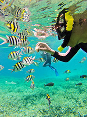 ... (Moson Kuo) Tags: travel fish seascape beautiful landscape boats amazing nikon scenery honeymoon diving spa ultrawide palau      2014 koror      jellyfishlake   gopro hero3        palauroyalresort  longrainbow   d800e  afs1424mm28g