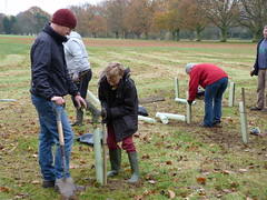 Tree planting in Bourne Park