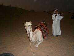 Visite d'un camp nomade dans le désert - Tour de chameau ^^ (Πichael C.) Tags: city camp vacances sand holidays eau dubai desert dune uae sable landmark camel le ville dans unis visite tourisme dun désert nomade chameau dubaï arabes emirats