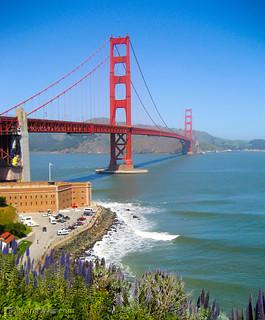 Golden Gate Wildflowers