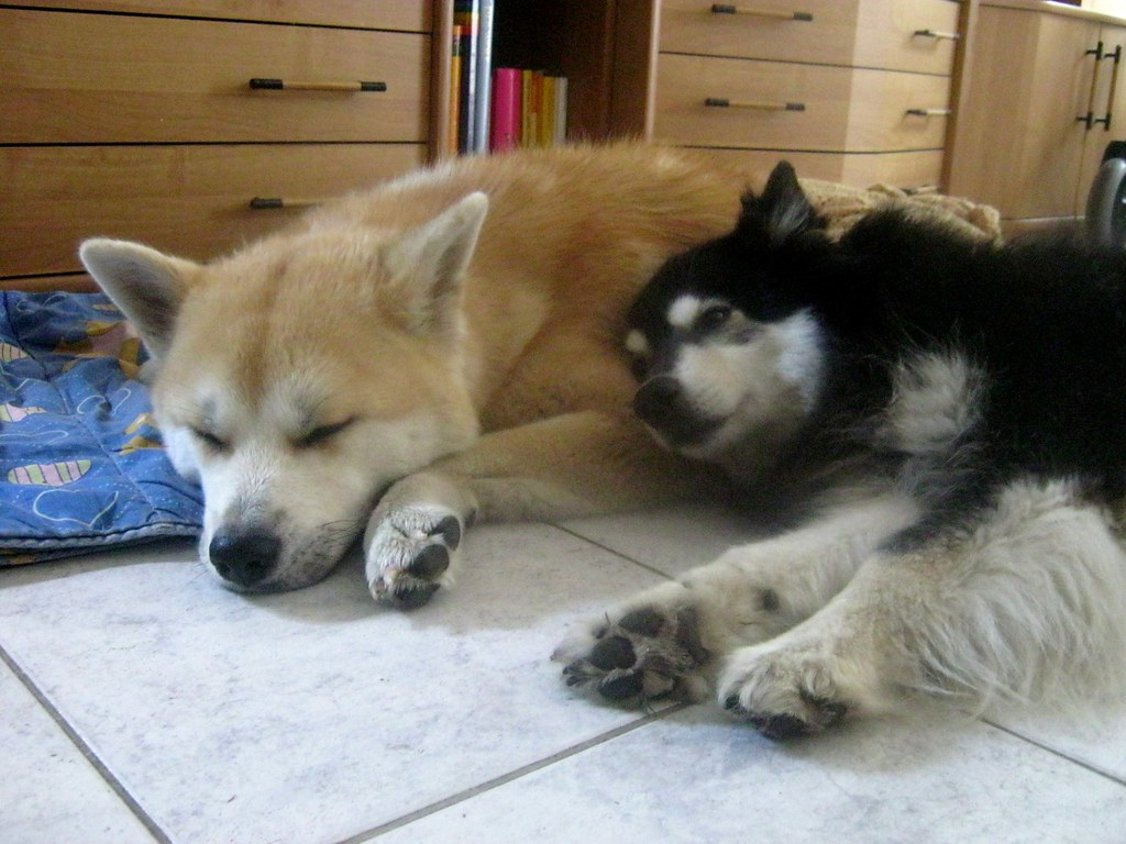 the world u0026 39 s most recently posted photos by samurai-akita