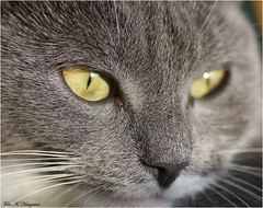 Up close, and personal (K. Haagestad) Tags: animal cat kitten feline
