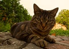 Hello Kitty (Stephi 2006) Tags: cat