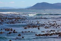 Dyer Island Channel, Western Cape, South Africa (José Rambaud) Tags: africa sea wild seascape southafrica mar wildlife atlantic afrika atlántico oceano atlantico westerncape suidafrika dyerisland sudáfrica gansbaii