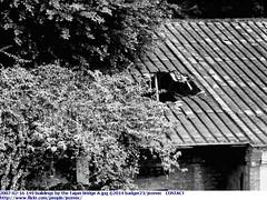 2007-02-16 149 buildings by the Taipei Bridge A (Badger 23 / jezevec) Tags: roc taiwan taipei formosa  taipeh kina  2007  jezevec  republicofchina  taibei    republikken  tajwan  tchajwan    iloan     republikchina thivn  tapeh taivna tavan     thipets   taip tchajpej ibc