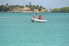 DSC_6066 (eric15) Tags: beach race cat surf sailing wind offshore competition surfing racing aruba international catamaran sail windsurfing regatta optimist sunfish 2014