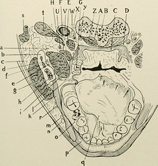 Anglų lietuvių žodynas. Žodis dentin reiškia n amer. = dentine lietuviškai.
