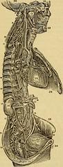 Anglų lietuvių žodynas. Žodis pulmonary plexis reiškia plaučių plexis lietuviškai.