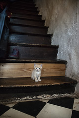 (moggierocket) Tags: cute stairs ginger kitten thecatwhoturnedonandoff thelittledoglaughedstories