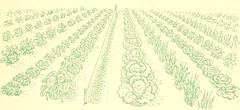 Anglų lietuvių žodynas. Žodis cauliflower ear reiškia žiediniai kopūstai ausies lietuviškai.
