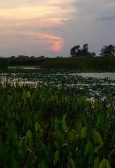 IMG_5148.jpg (wwang5) Tags: sunset illinois unitedstates naperville springbrook dupagecountyforestpreserve springbrookforestpreserve