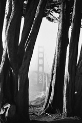 ll (Nicholas_Luvaul) Tags: sf california bridge trees white abstract black film fog analog 35mm golden bay nikon gate san francisco noir kodak trix 400 area fe2