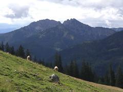 Schinder und Khe (bookhouse boy) Tags: mountains alps berge alpen tegernsee 2014 rottachegern sutten stmpfling bodenschneid bayerischevoralpen unterefirstalm bodenalm 15august2014
