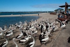 Looks Like the Man in Blue (Jocey K) Tags: sea sky people seagulls pelicans water birds clouds boat sand labrador shadows australia queensland land goldcoast
