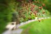 Høyt henger de (Birgit F) Tags: park flowers lensbaby idyll sti benk grimstad dømmesmoen lensbabycomposer
