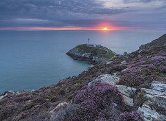 'Heather On The Stacks' - South Stack, Anglesey (Kristofer Williams) Tags: sunset lighthouse seascape wales landscape coast cloudy heather cymru cliffs headland irishsea ynysmon anglesey holyhead southstack ynyslawd