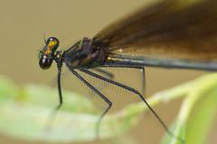 Bug eyes (wjcay) Tags: macro canon insect dragonfly bokeh eos7d