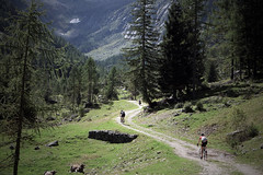 Val Bodengo (Cani Sciolti Valtellina) Tags: mountain mountains alps bicycle cx alpi montagna bicycletouring gravel cyclocross bicicletta biketouring bodengo sterrato ciclocross mountaincred ingiroaccazzo ciclicorsa maybewrongvalley maybewrongbike