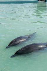 DSC_1240.jpg (d3_plus) Tags: sea sky nature field japan port aquarium countryside scenery dolphin chiba  ricefield       j4 choshi   fineday   bottlenosedolphin  fishingport      nikon1   tokawa  1nikkorvr10100mmf456 1 nikon1j4  inubosakimarinepark