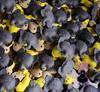 (ovelhanegra_toys) Tags: birthday party animals zoo handmade decoration felt feltro animais manualidades fieltro feltcraft feitoamão ovelhanegratoys