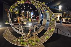 Miracle Dining Table #1 (chooyutshing) Tags: singapore display meadow marinabay ta1 baysouth gardensbythebay nationalparksboard singaporegardenfestival2014 miraclediningtable celebrationsfloraltableseries tanhanxianghanashworth