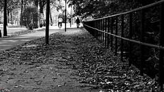 CityWalk - The Hague, #n of n (Jan Bierens) Tags: blackandwhite 50mm streetphotography streetlife cropped straat primelens straatfotografie streetphotographyblackandwhite d5100 darktable