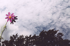 misplaced (patrickhruby) Tags: trees shadow sky flower canon refelections vsco canon5dmkii