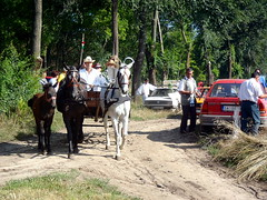 P7130074 (tadeus71) Tags: festival serbia harvest breg vojvodina srbija vajdasg voivodina senta gornji zenta szerbia compet felshegy