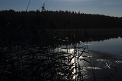 Moonlight_2014_09_07_0025 (FarmerJohnn) Tags: cloud moon lake reflection water night clouds canon suomi finland calm september silence midnight moonlight vesi kuu y laukaa jrvi pilvi keskinen syyskuu tyyni keskiy kuutamo valkola vedenpinta hiljaisuus septembermoon lakesurface canon7d heijatus anttospohja juhanianttonen ef1635l28iiusm
